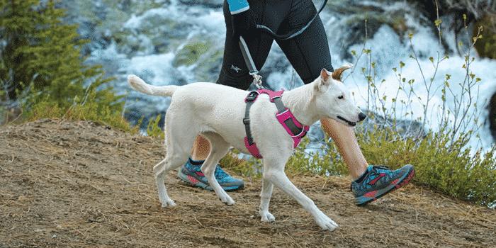 Best dog harness