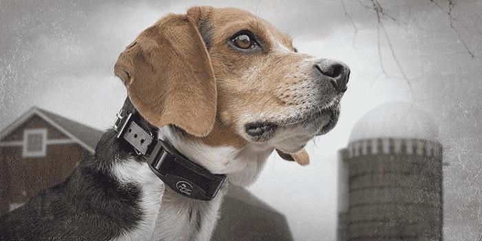 best bark collars