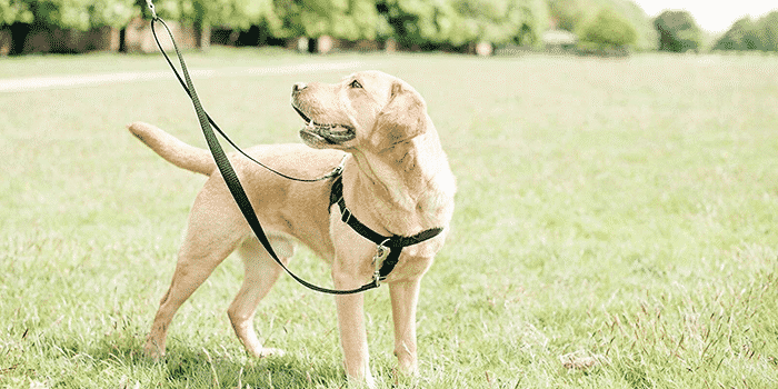 The Best No Pull Dog Harnesses in 2021