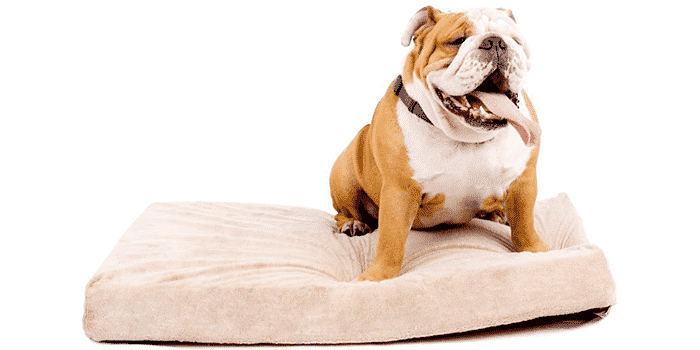 The Best Orthopedic Dog Beds in 2021