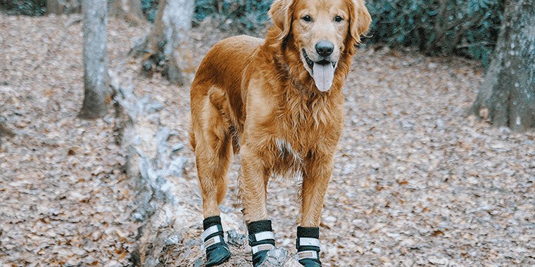 The Best Dog Boots in 2021