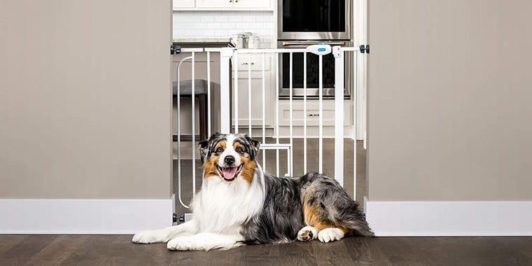Best Dog Gates