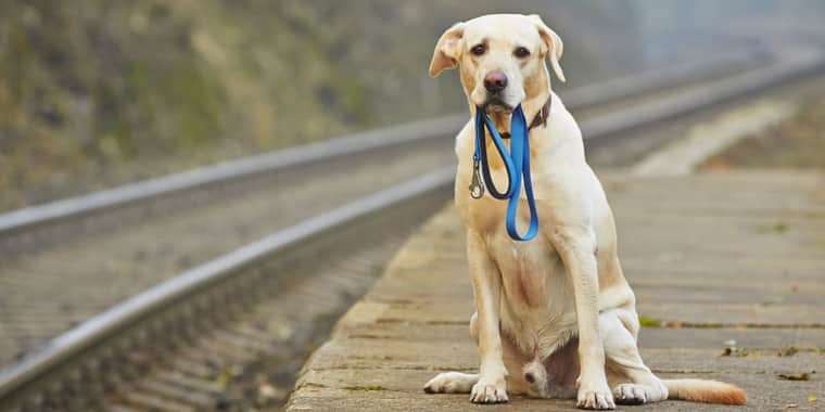 Tips to Ensure You Never Lose Your Dog