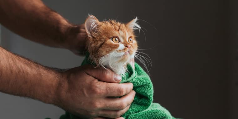 The Best Flea Shampoos for Cats in 2021