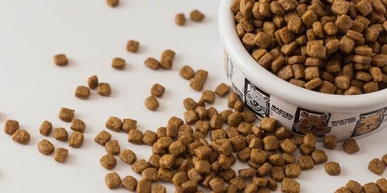 The Best Cat Foods for Older Cats in 2021