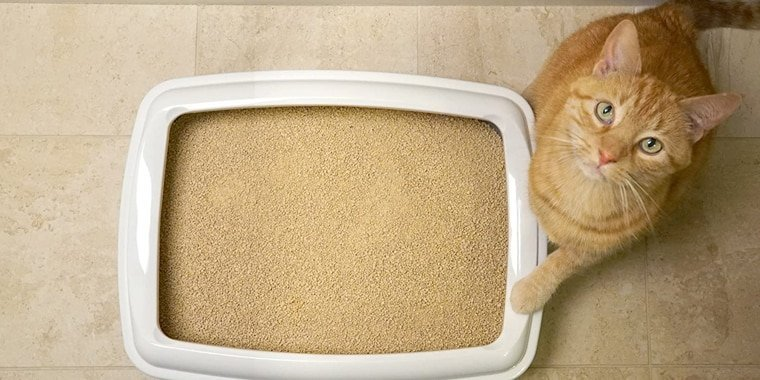 Best Cat Litters For Your Cat