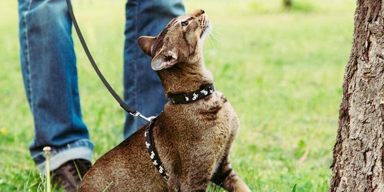 Best Cat Leashes