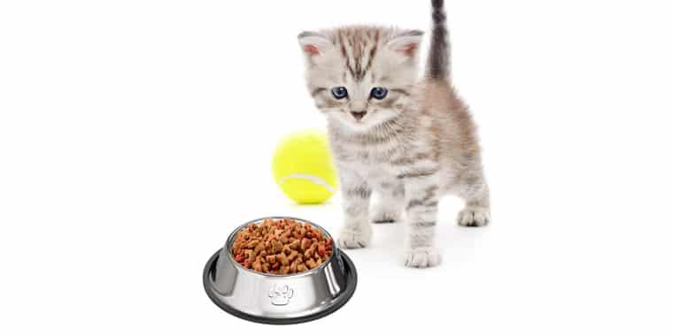 Best Grain Free Cat Foods