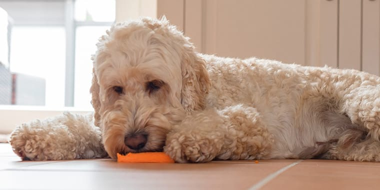 Vegetables that Dogs Can Eat Safely