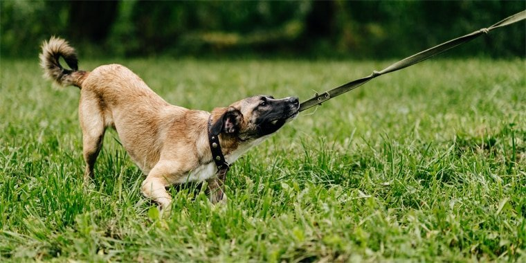 How to Stop Your Dog from Pulling on Leash
