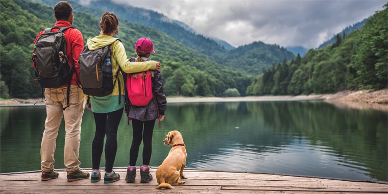 How To Train Your Dog Before Travelling