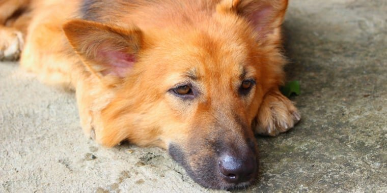 Ways to Handle Your Dog's Anxiety