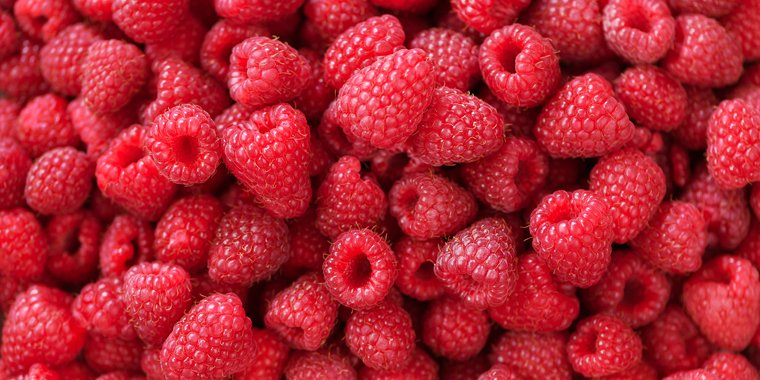 Is it Safe for Dogs To Eat Raspberries