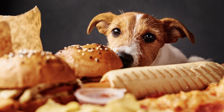 How to Train Your Dog Not to Steal Food
