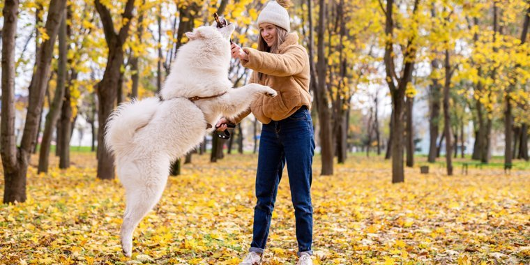 Tips to Train Your Dog Not to Jump on You