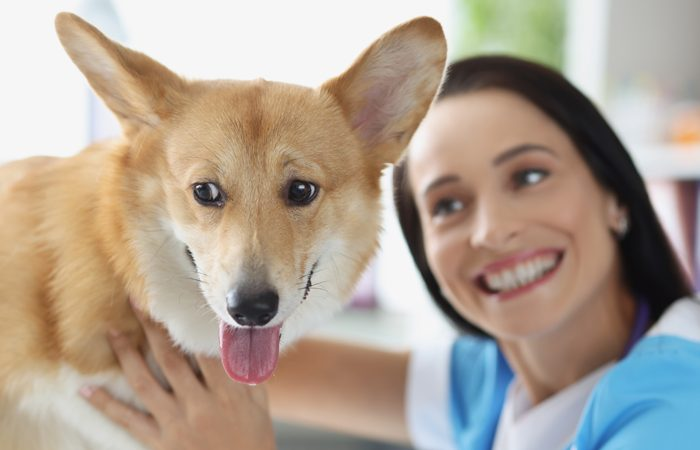Dogs Bad Breath and How to Fix It