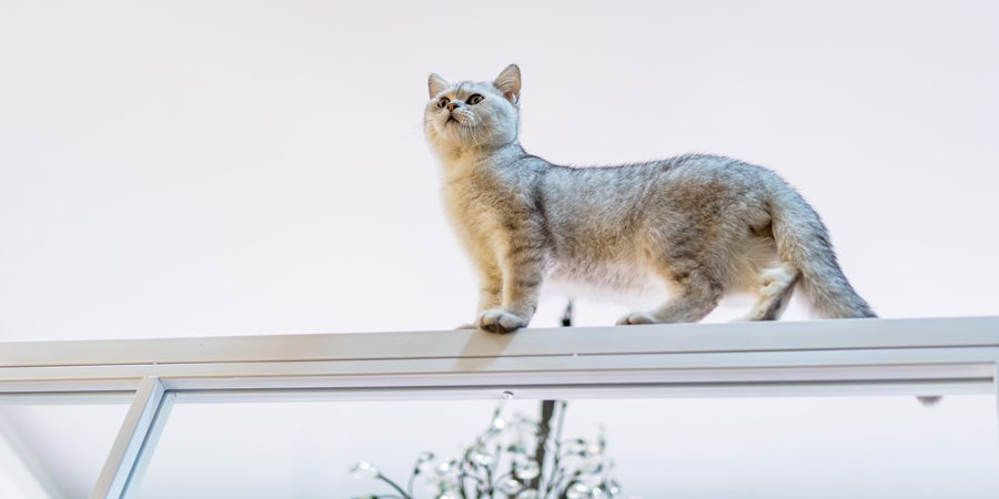 Why Do Cats Like High Places